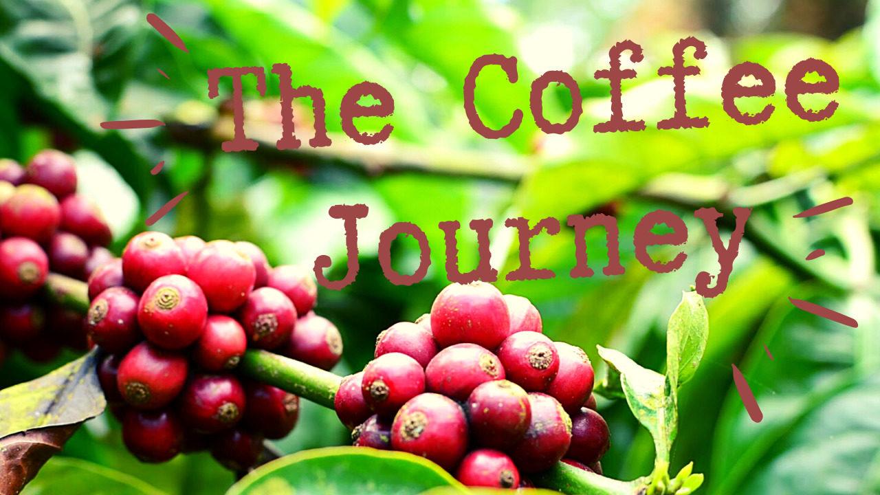 コーヒーをめぐる旅